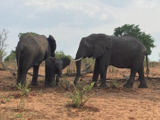 Chobe National Park, Botswana: photo4.jpg