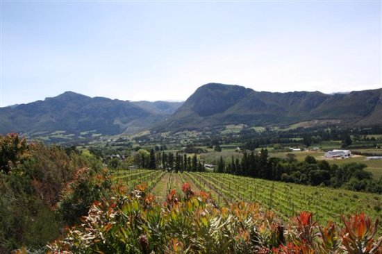 Franschhoek, Güney Afrika: View from the cottage