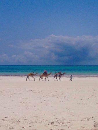 Kenyaways Beach Bed & Breakfast: photo3.jpg