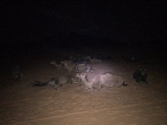 Camel Trekking - Day Tours: The camels were still resting when I awoke at 4:30 am