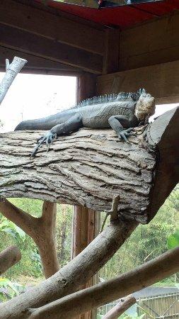 Parc des Mamelles, le Zoo de Guadeloupe: photo0.jpg