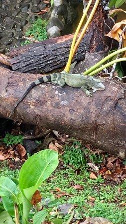 Parc des Mamelles, le Zoo de Guadeloupe: photo1.jpg