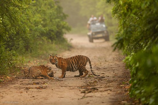 Online Corbett Jungle Safari