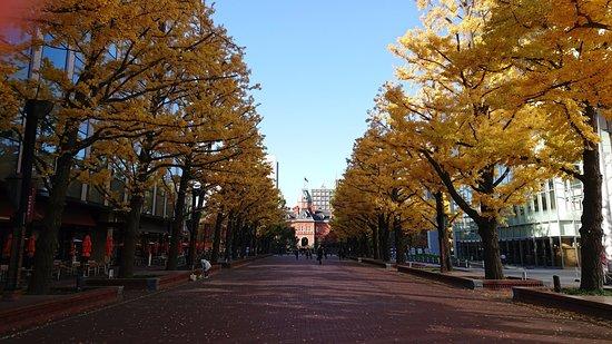Former Hokkaido Government Office Building: 道庁とイチョウ並木