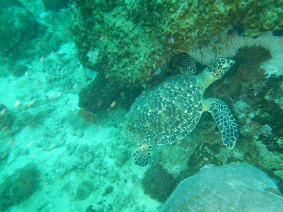 Diving Poseidon: Tolle Tauchspots um die Nordspitze Sansibars (Nungwi)