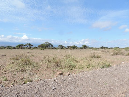 YHA Kenya Travel, Kenya Safari Tours, Kenya Tours, Budget