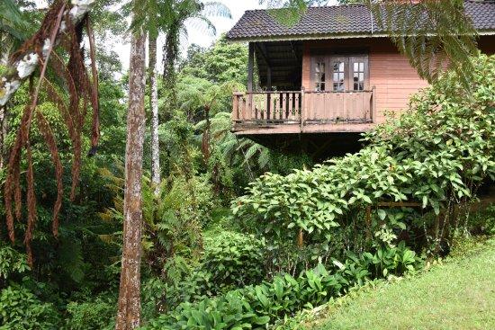 Borneo Highlands Resort : Derelict cabins no longer in use, but good area for birding.