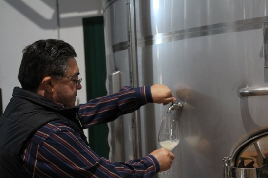 Bodega Los Aljibes: We sampled some white wine from the tank.