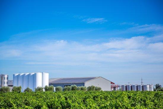 Peltier Winery & Vineyards