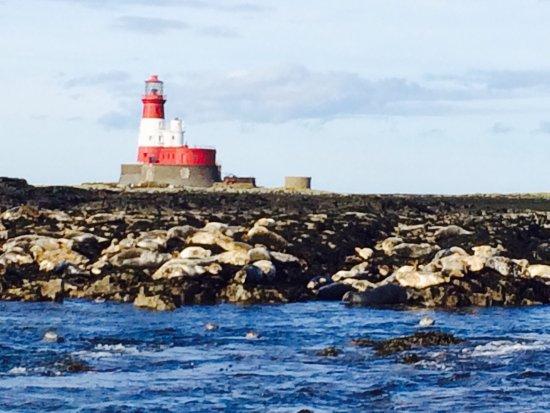 Farne Island Tours Serenity