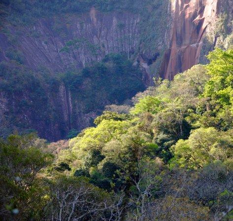 Amboró National Park: foresta