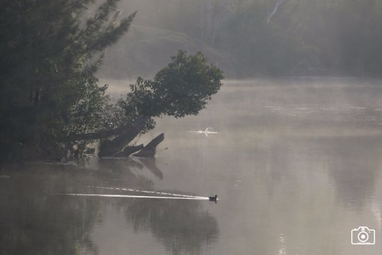 Imbil, Australia: Misty morning on Yabba Creek
