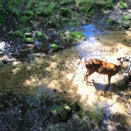 Holderness, Νιού Χάμσαϊρ: Deer Enclosure