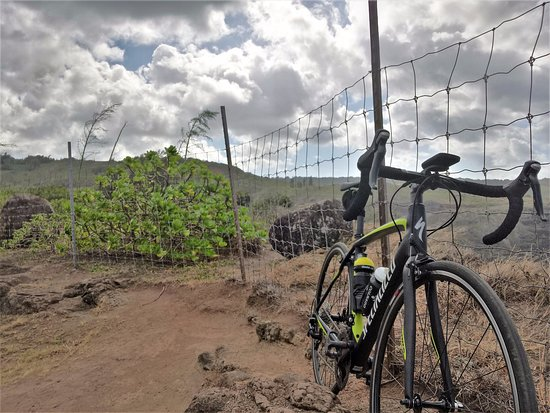 West Maui Cycles: Carbon frame specialized road bike with ultegra and look clipless pedals.