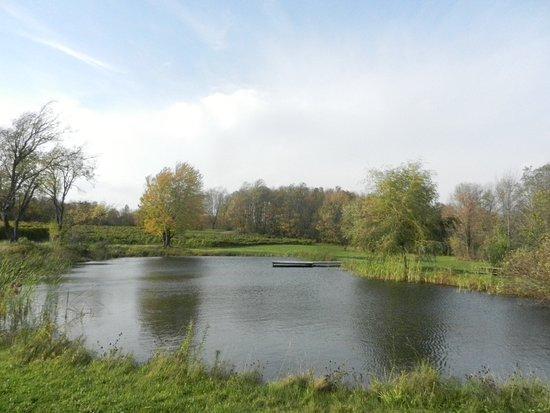 Sutton-billede
