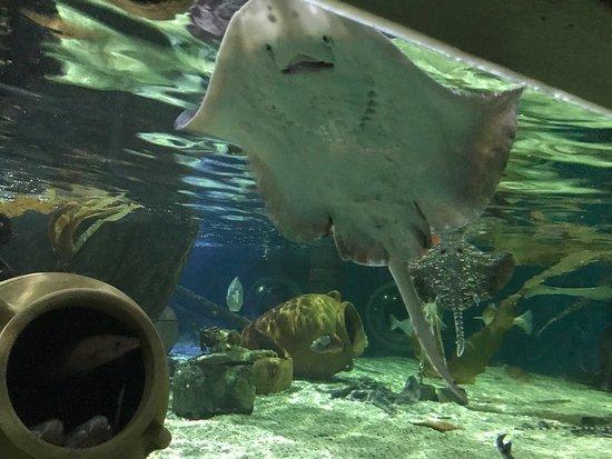 Scarborough SEA LIFE Sanctuary: photo0.jpg