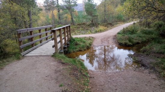 Aviemore, UK: photo3.jpg