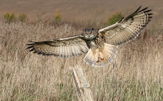 The Barn Owl Centre (Gloucester, England): Top Tips Before ...