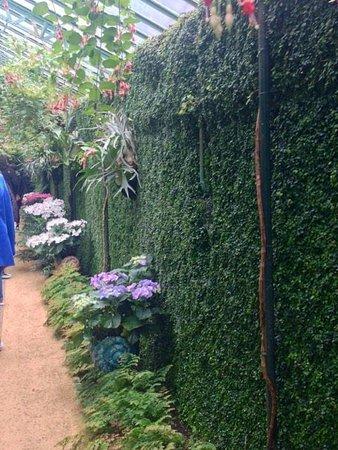 Serres Royales De Laeken: Green walls