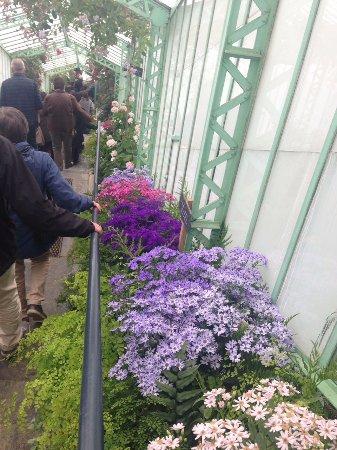 Serres Royales De Laeken: Tunnel of flowers