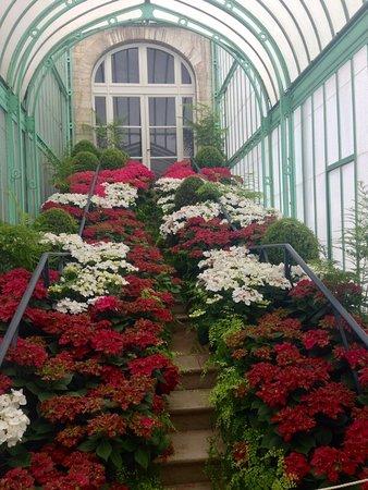 Serres Royales De Laeken: Flowers