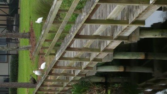 Port Saint Lucie, Flórida: 20171024_140909_large.jpg