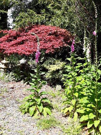 Manawatu-Wanganui Region, New Zealand: The Japanese garden space