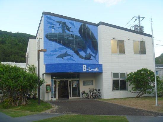 B-Ship
