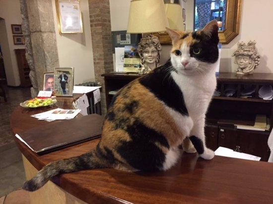 Hotel La Pensione Svizzera: Hotel cat!