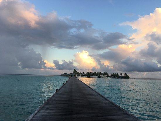 Nalaguraidhoo Island: DiveOceanus