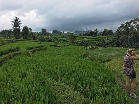 Bali Bike Baik Cycling Tours: photo1.jpg