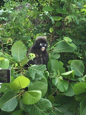 Mu Ko Ang Thong National Park: photo8.jpg