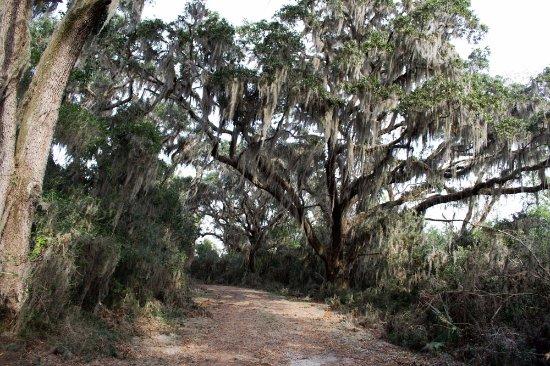 Hardeeville, SC: Woods