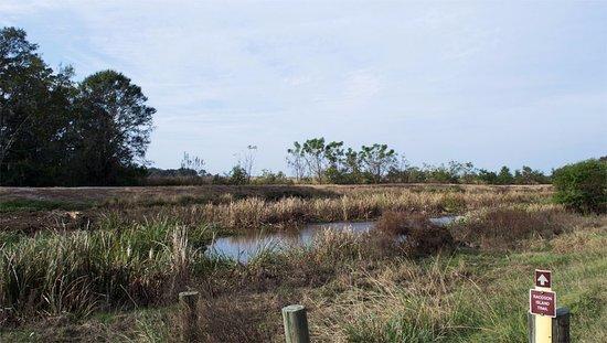 Hardeeville, Carolina del Sur: View