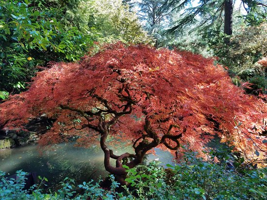 Kubota Garden: Glorious fall foliage - the rest of the year offers other pallets of color & texture.