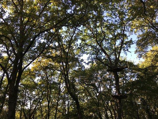Pont-du-Casse, France: Happy Forest