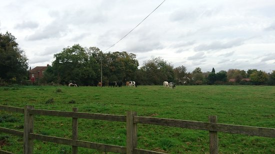 Pontlands Park: DSC_0012_large.jpg