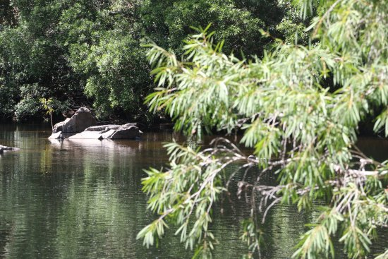 D'Arcy of Daintree 4WD Tours: photo1.jpg