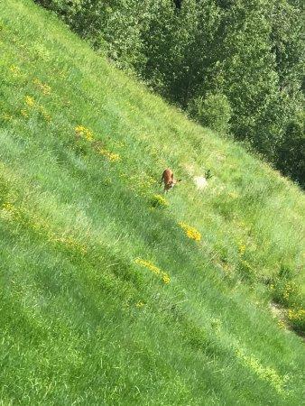 Whitefish, Montana: Wildlife from the lift