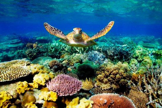 Sunkissed Divers Okinawa