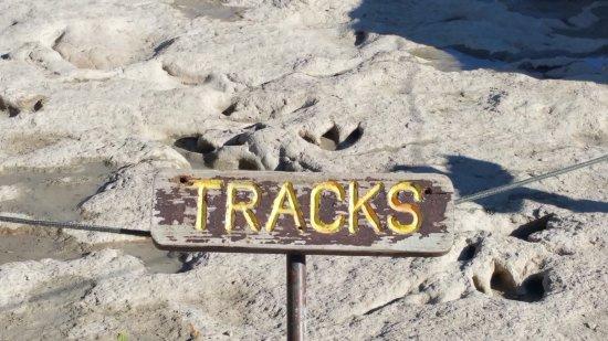 Dinosaur Valley State Park: Lots of tracks