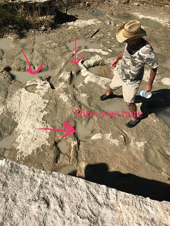 Dinosaur Valley State Park: Look up Ken Kuban. He has spent over 30 years studyng this site
