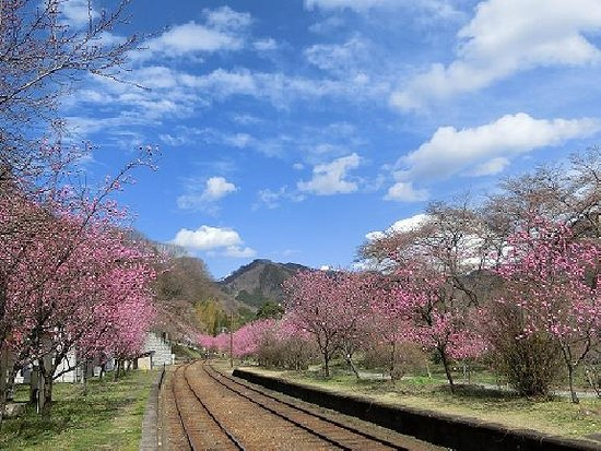 Kanto, Giappone: 花桃が並ぶ神戸駅