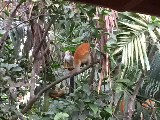 Hotel Costa Verde: The monkeys that greeted us on arrival