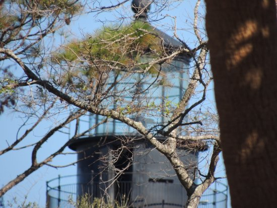 Hunting Island State Park: The lighthouse still stands above the treess & beach