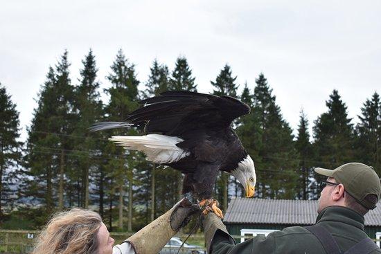 Phoenix Falconry: DSC_0989_large.jpg
