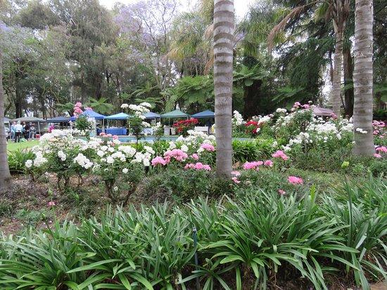 Modderfontein, Sør-Afrika: Garden of the Franz Hoenig Hauz