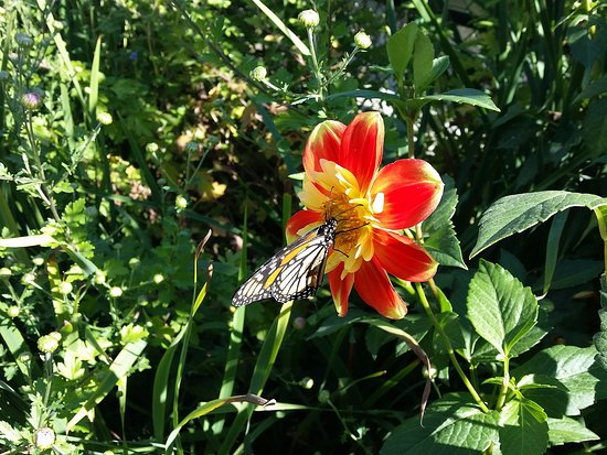 Bridge of Flowers: Even found a butterfly