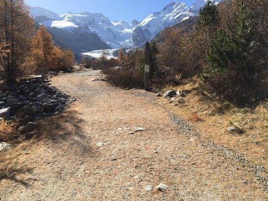 Morteratsch Glacier : Path to Morteratsch