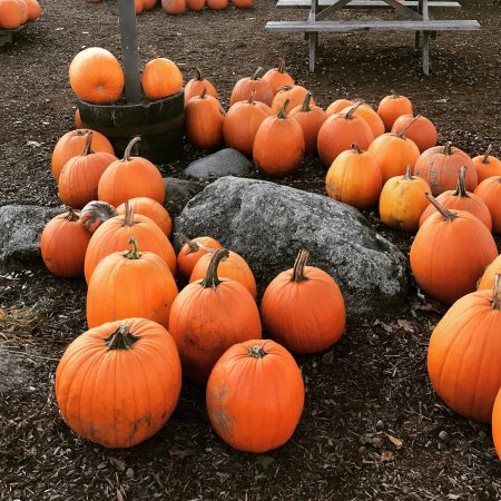 Moulton farm meredith all you need to know before you - Craigslist fort wayne farm and garden ...